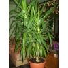 Недорого продам домашние растения